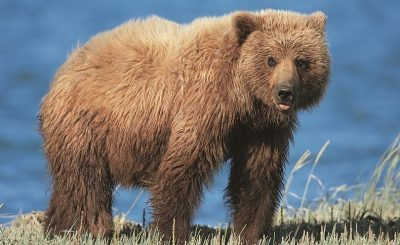 Hunting Rules Have Changed Mama Bear Care
